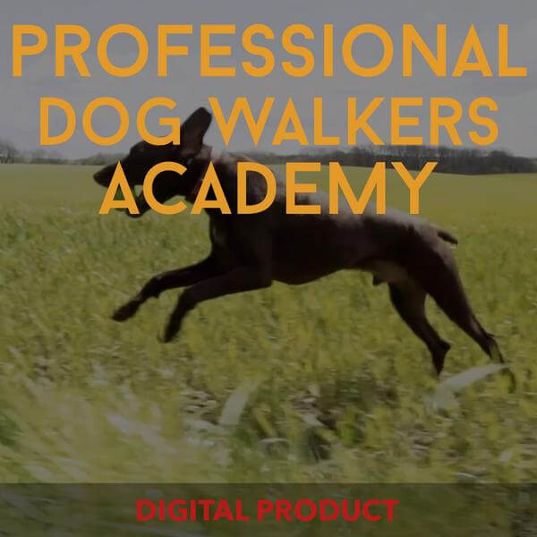 Professional Dog Walkers Academy